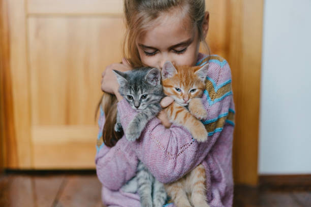 Little girl playing with kittens indoors stock photo