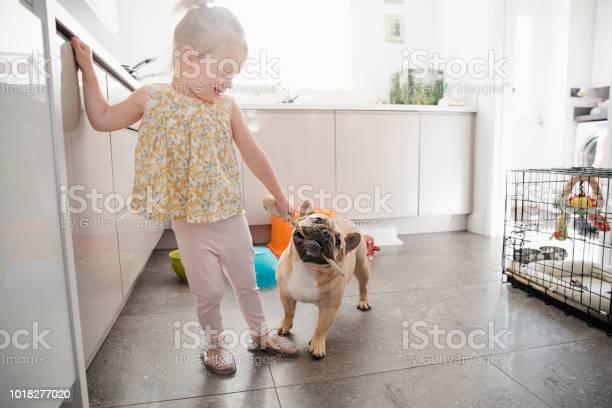 Little girl playing with pet french bulldog picture id1018277020?b=1&k=6&m=1018277020&s=612x612&h=jw49lcnmxcsqhdsaymbozrezc75eskhw5 uq4bf r7q=