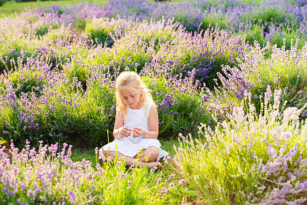 Little girl sitting in a lavender field stock photo