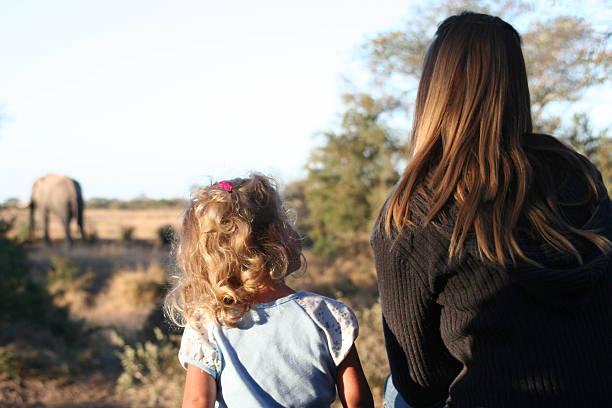 big fragen - safari tiere stock-fotos und bilder