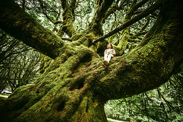 Little Girl Sitting on Centennial Tree Little Girl Sitting on Centennial moss covered Tree at Olympic National Park in Washington State. USA. 100th anniversary stock pictures, royalty-free photos & images