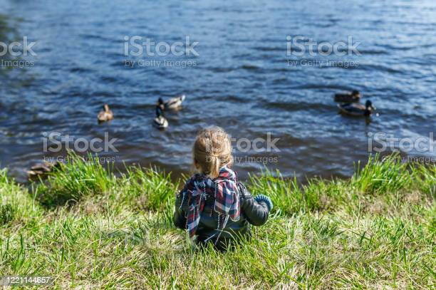 Photo of Little girl sitting on grass and looking at lake with floating ducks. Rear view