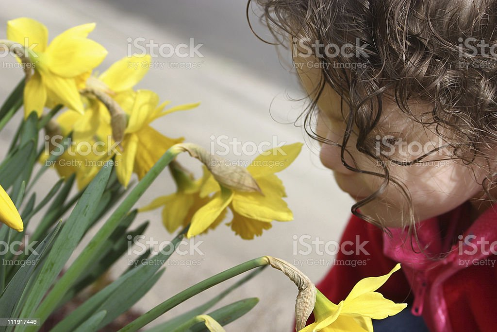 Little Girl Smelling Daffodils royalty-free stock photo