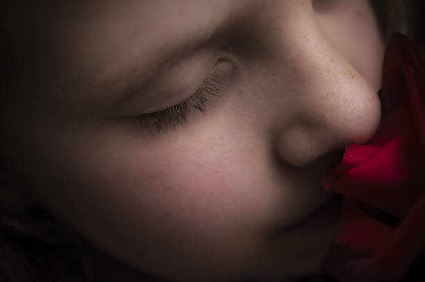 Little Girl  Smelling Red Rose stock photo