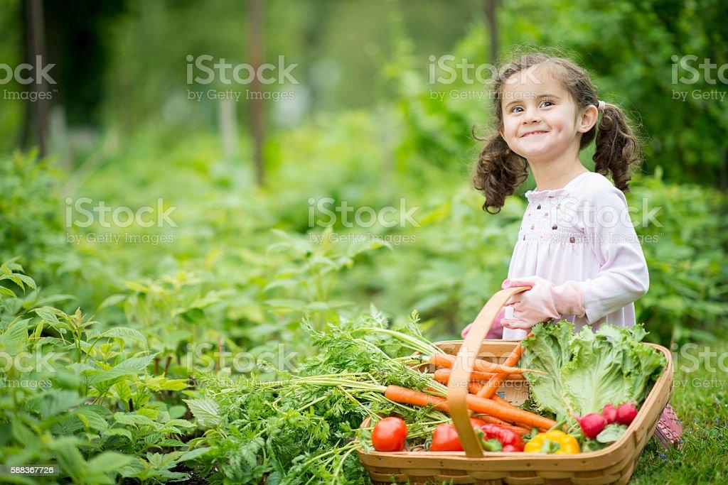 Little Girl Tending to the Garden stock photo