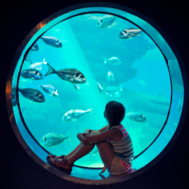 Little girl visiting a huge aquarium Little girl aged 8 looking at fish in a huge aquarium aquarium stock pictures, royalty-free photos & images