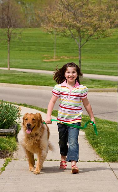 Little Girl Walking Dog stock photo