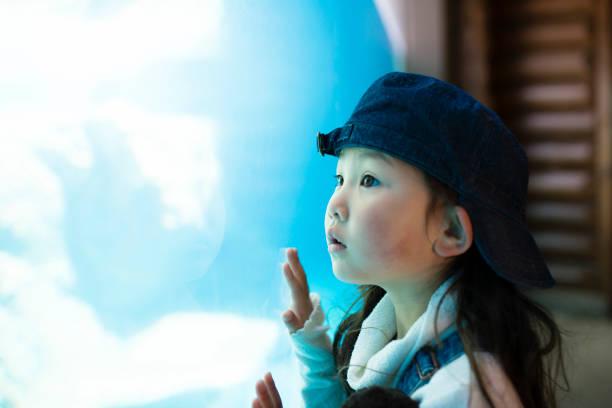 kleine mädchen beobachten aquarium - interessiert stock-fotos und bilder
