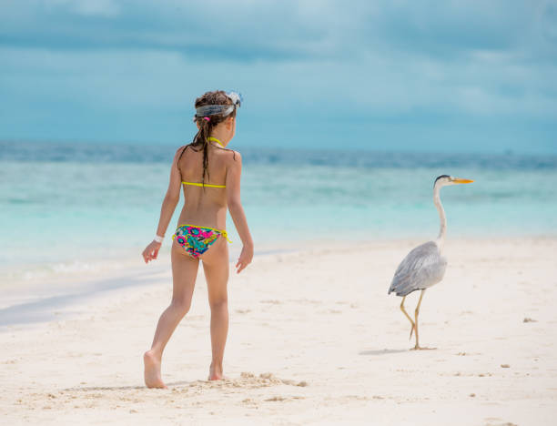 little girl watching grey heron on the maldives beach - girl alone in swimsuit stock photos and pictures