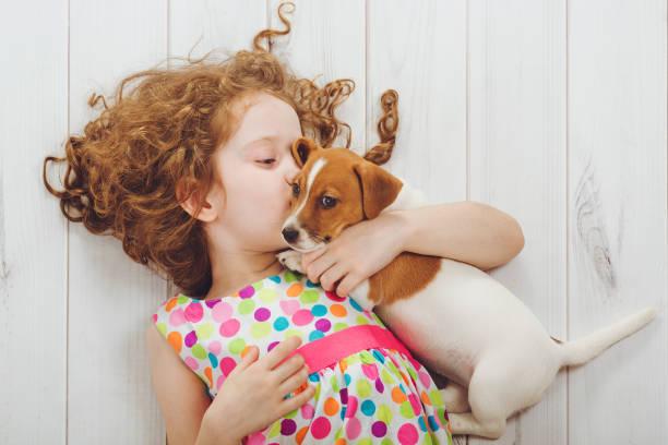 liten flicka viskar med hennes valp jack russell. - puppies bildbanksfoton och bilder