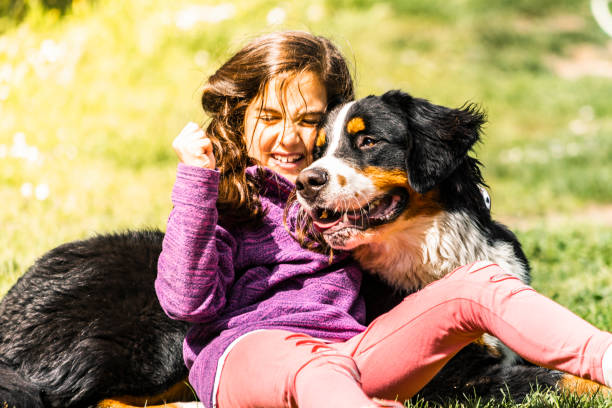 Little girl with a bernese mountain dog picture id1150018703?b=1&k=6&m=1150018703&s=612x612&w=0&h=xbgw6pswru4doeknxdhcnbijodbrx3zwmwufohwo1nu=