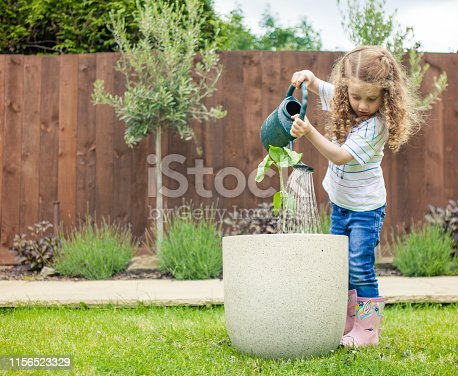 A happy little girl at home is watering a newly planted sunflower.