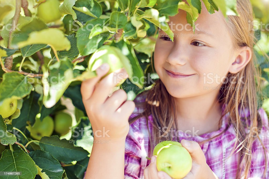 Little girl with apples royalty-free stock photo