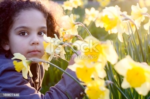 Royalty free stock photo of little girl with group of daffodil at sunset.