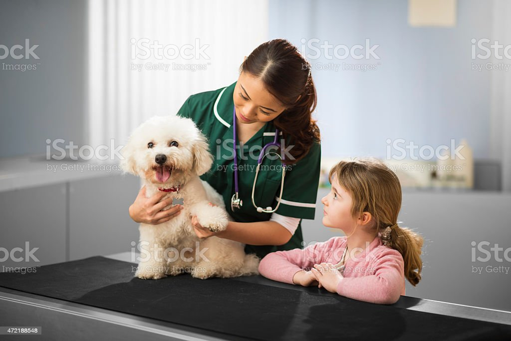 little girl with dog at the vets stock photo