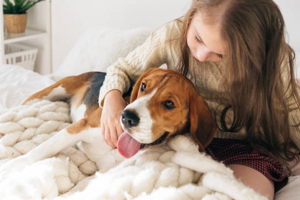 Little girl with dog lying on bed and laughing picture id1134658921?b=1&k=6&m=1134658921&s=612x612&w=0&h=1qd9hwrqwxmzc  ks5xzppuwme3dwugiom9bxfk j2m=