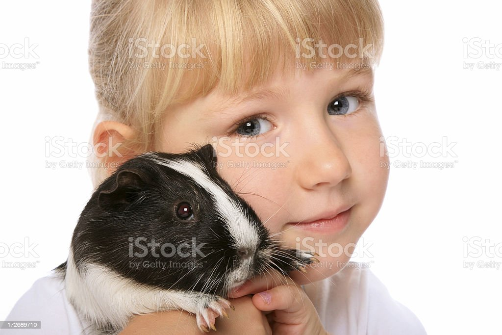 Little girl with her guinea pig on white background stock photo