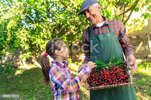 Mature famer holding a basket with cherry fruits, little girl standing next to him.