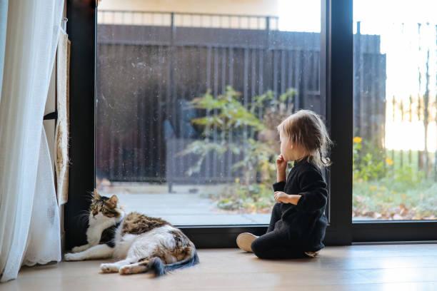 Little girl with kittens picture id1219796201?b=1&k=6&m=1219796201&s=612x612&w=0&h=cmnazuenveprw72mupkw4rc esahz250ulsl 6sy2ky=