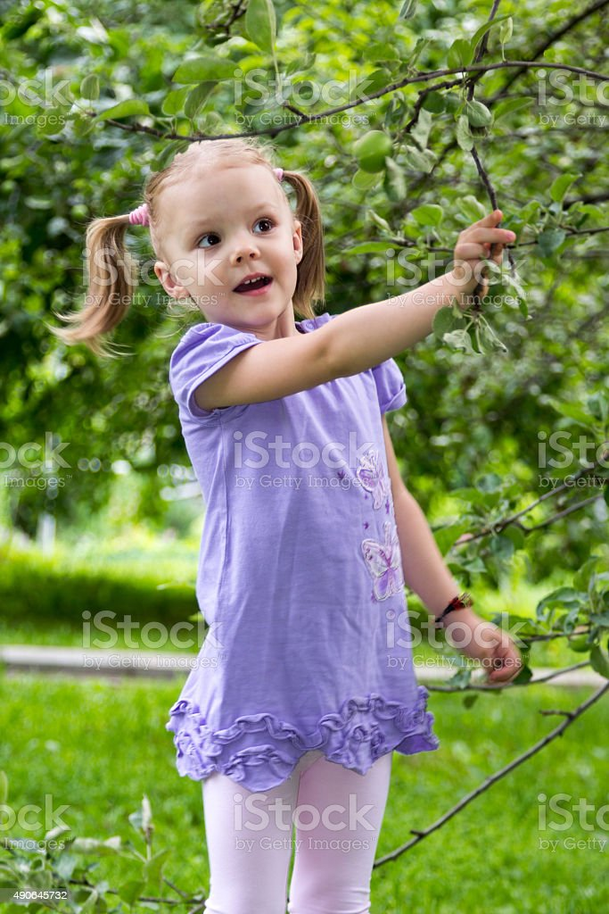 little girl with pigtails in amazement looks at apples stock photo