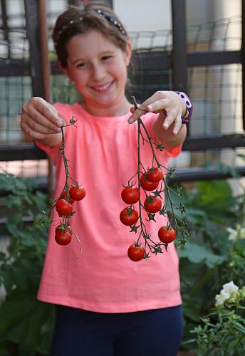 빨간 토마토를 선택 했다 분홍색 T셔츠와 어린 소녀 T 셔츠에 대한 스톡 사진 및 기타 이미지
