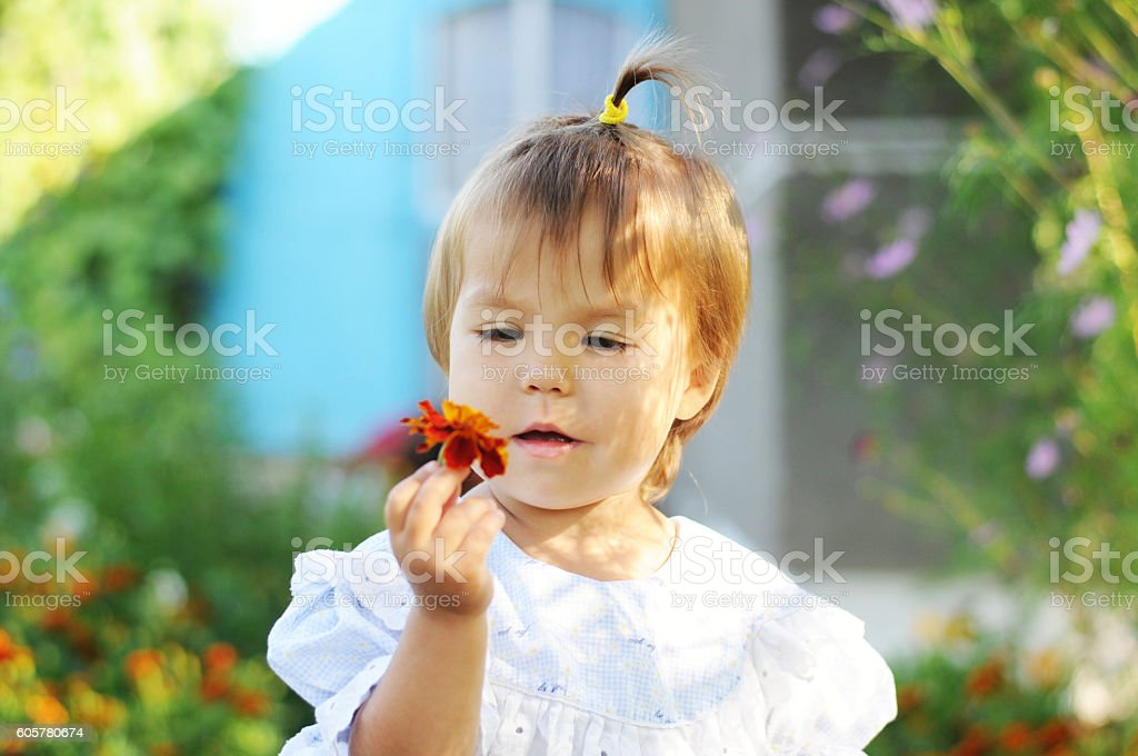 Little girl with ponytail looking at marigold flower stock photo