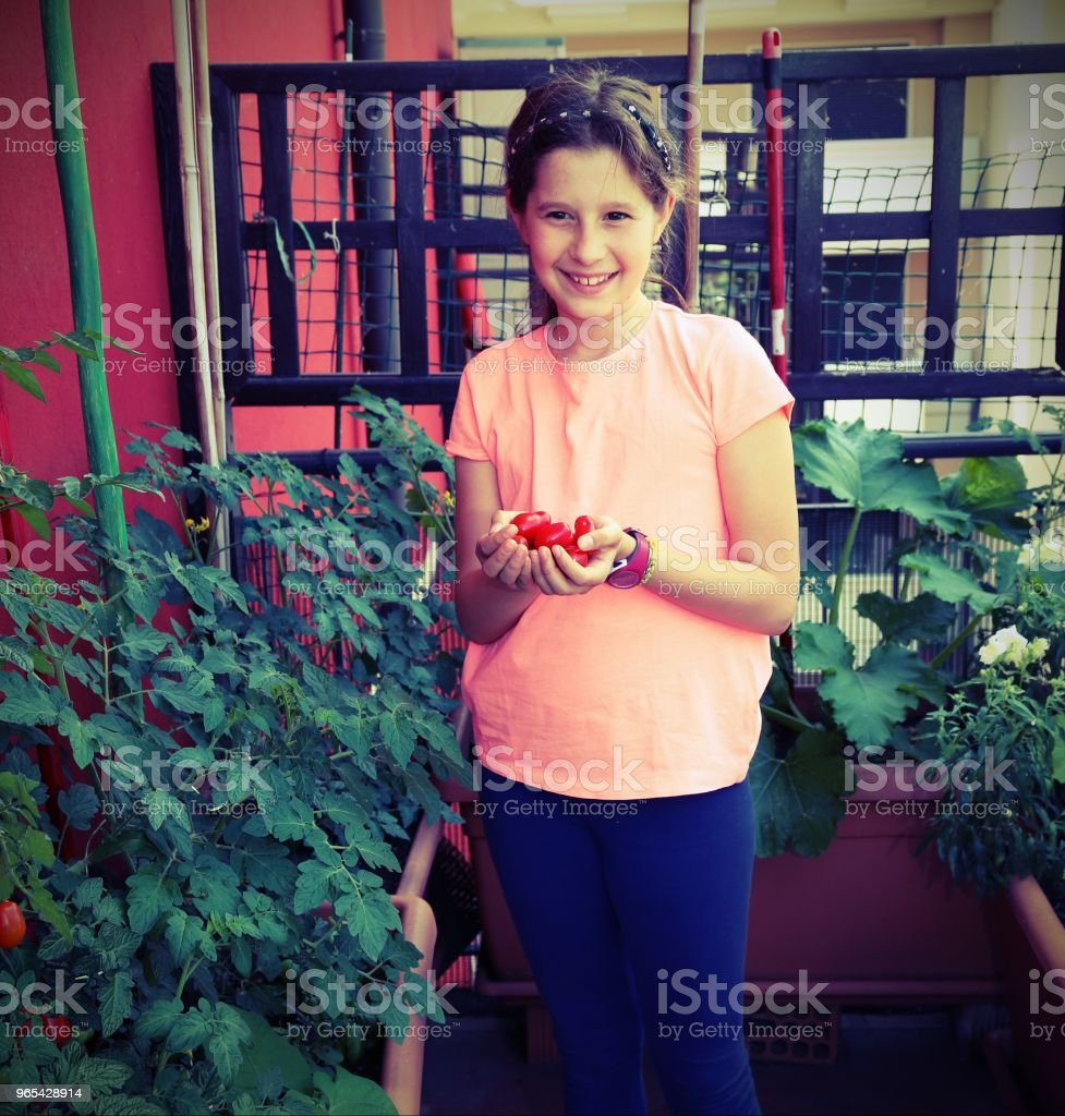 little girl with tomatoes in her hand in her terrace with plants zbiór zdjęć royalty-free