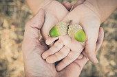 istock Little girl's hands holding acorns, close-up 1276068707