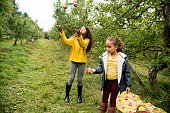 Two cute mixed-race little girls playing with apples in an orchard. They are trying to juggle with them. Both are wearing warm clothes on an autumn day. Horizontal full length outdoors shot with copy space.