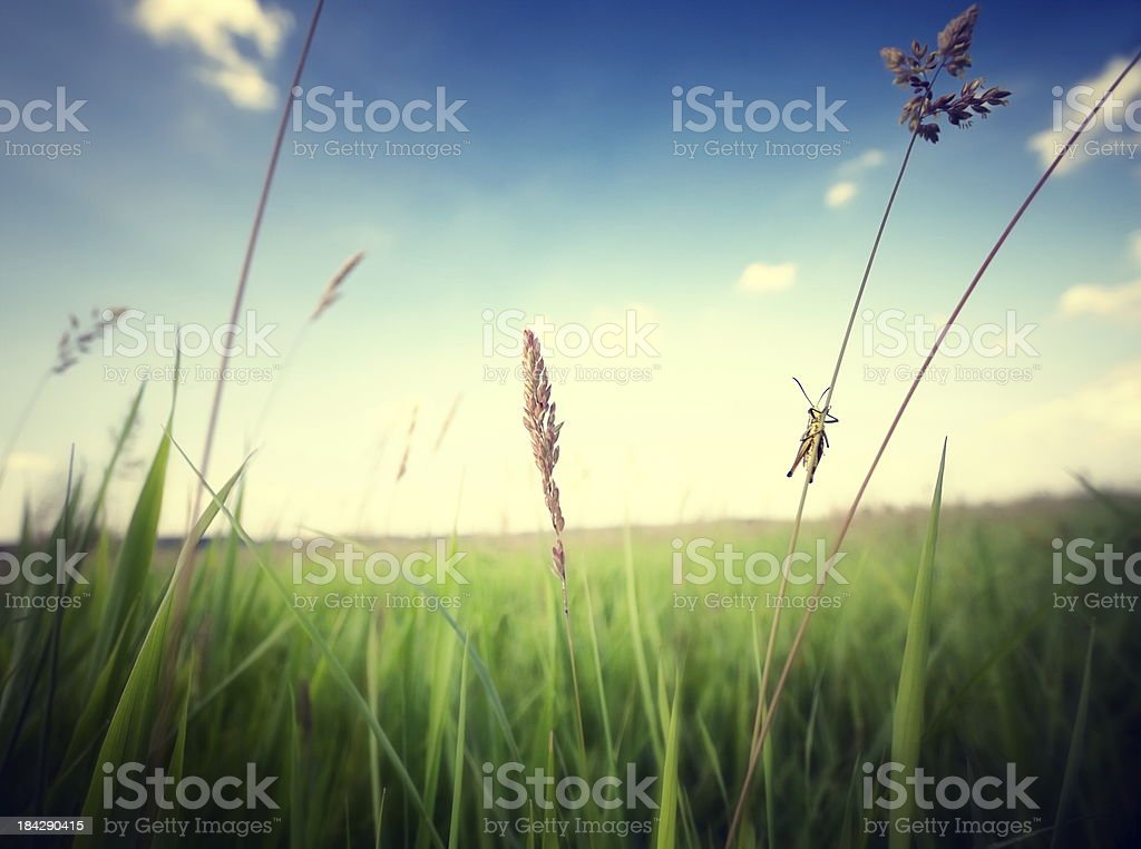 Little grasshopper is watching stock photo