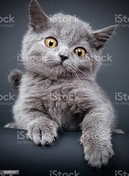 Little gray cat picture id165820327?b=1&k=6&m=165820327&s=612x612&h=dny6fmv8sse  wpm2eyhrmqipmmcrn4vh1yliugcrtm=