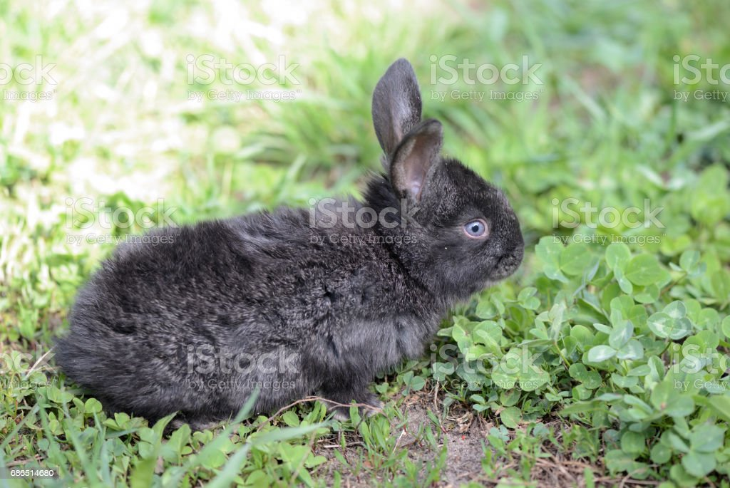 Little gray rabbit on a meadow with clover close up royalty free stockfoto