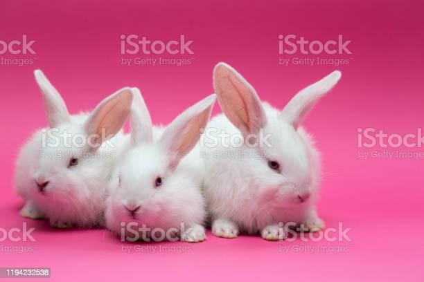 Little gray rabbit picture id1194232538?b=1&k=6&m=1194232538&s=612x612&h=f0vb3qi1ynoauqadczgz h55d98yy ekwwewzqecu9y=
