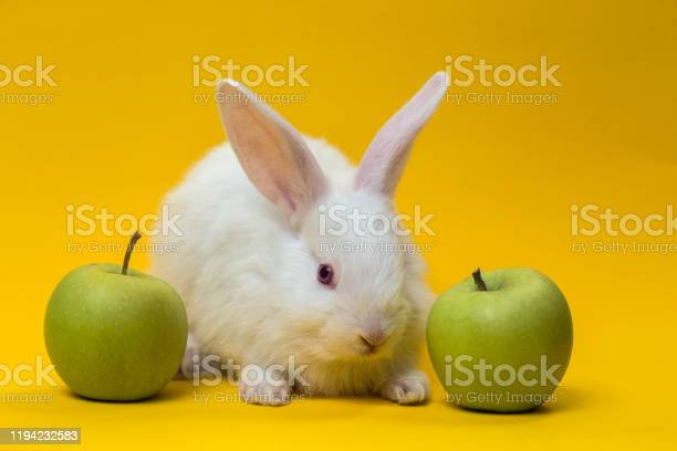 Little gray rabbit picture id1194232583?b=1&k=6&m=1194232583&s=612x612&h=5tnr7aa9hcmzcnioozf1ec4khngu9wwelpgr inzj 4=