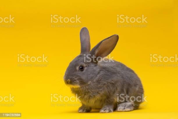 Little gray rabbit picture id1194232594?b=1&k=6&m=1194232594&s=612x612&h=jvatd2zhtkqvwmetlxw9yitviyrn7vao7g3tomdeose=