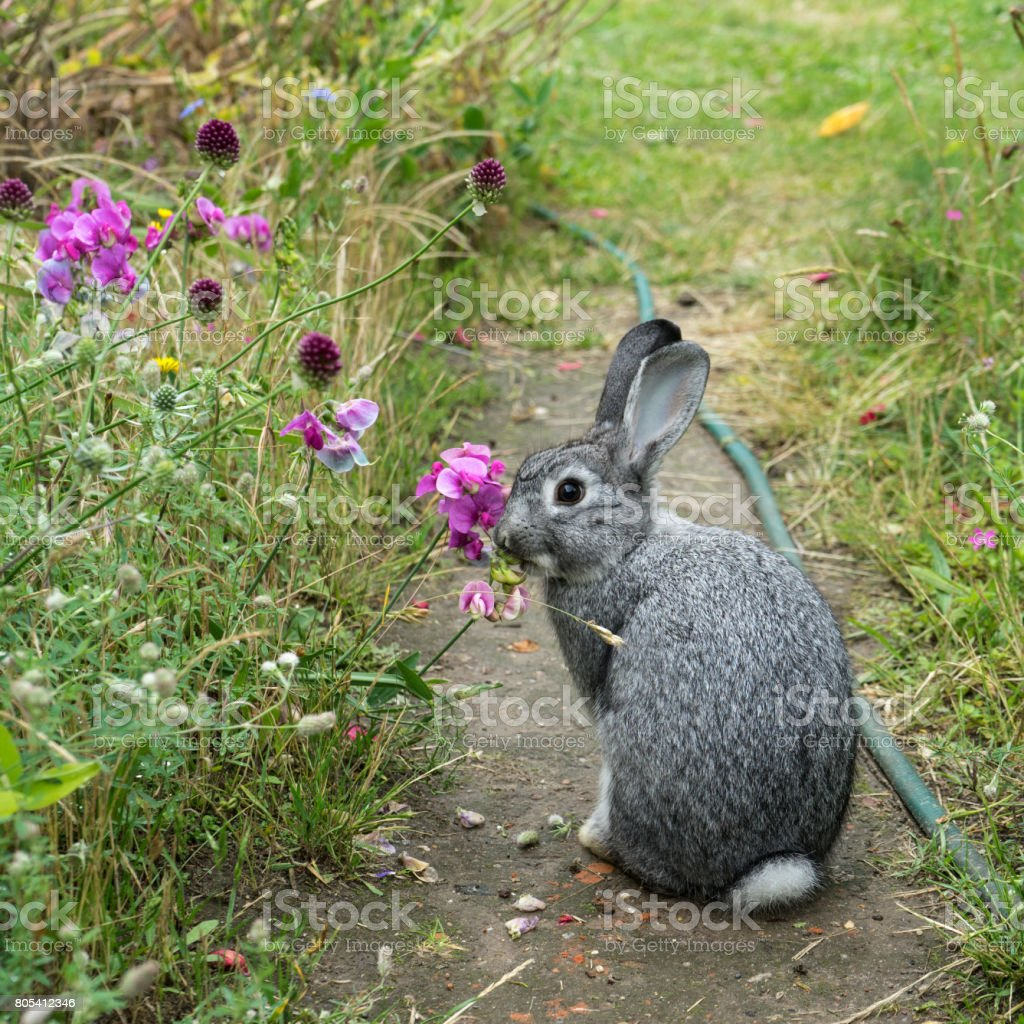 Kleine graue Kaninchen – Foto