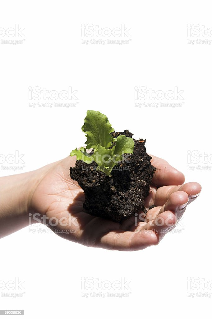 Little green Donation royalty-free stock photo