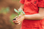 Close-up shot of a unrecognizable little boy holding young plant.