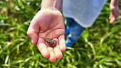 Little green frog sitting on a child hand. Young frog on a palm. Fauna photo amphibian photo. Environmental Protection.