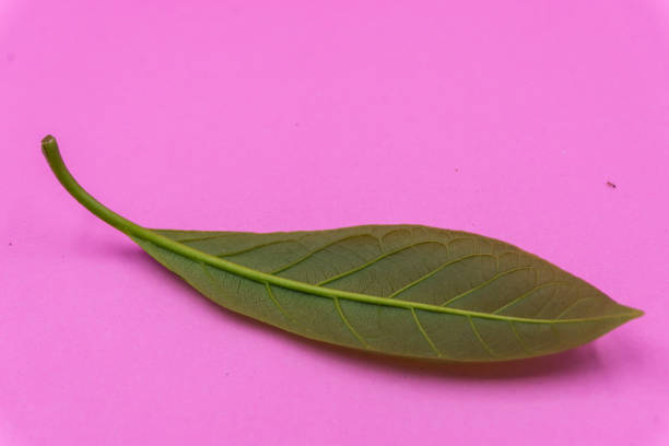 Little green Leaf on pink pastel background stock photo