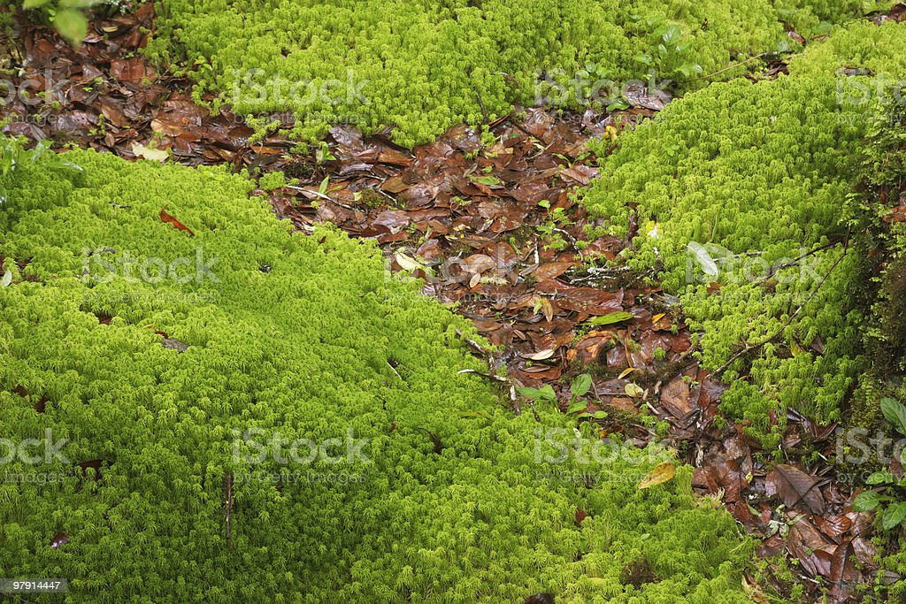Little green life royalty-free stock photo