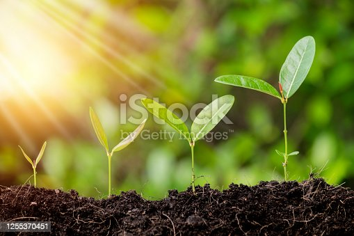 Grow business - financial and investment concepts. Little green seedlings growing in soil against blurred background