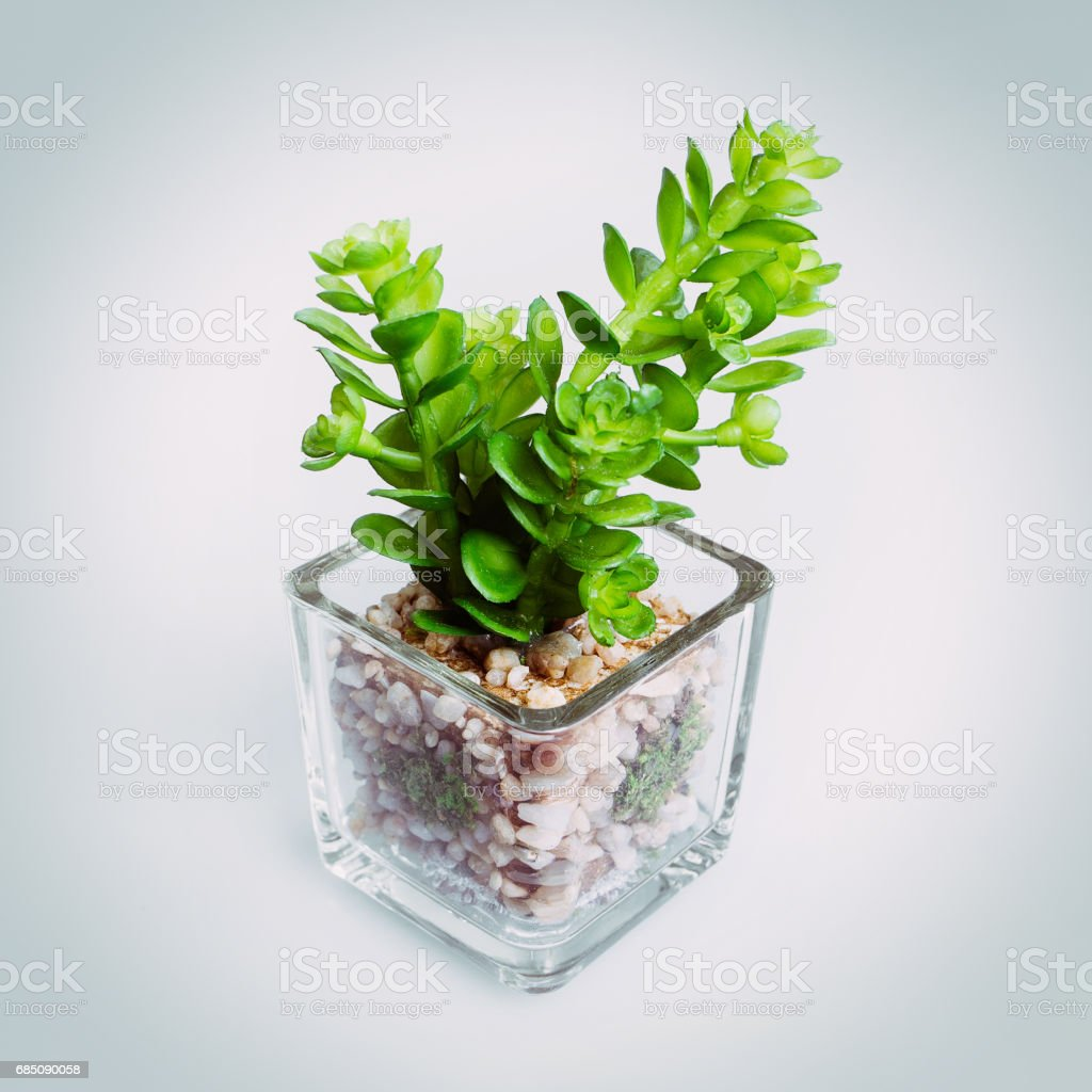 little green tree plant royalty-free stock photo