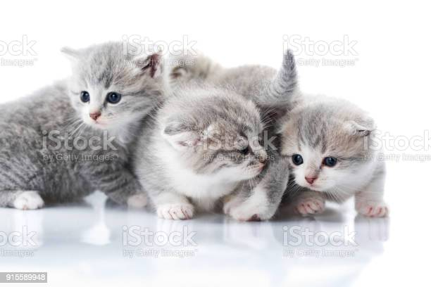 Little grey kittens with blue eyes being curious and exploring world picture id915589948?b=1&k=6&m=915589948&s=612x612&h=zbp9 cjwtmvxcj4ev mccevkioitdhfbjva0iib8qio=