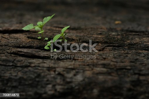 istock Little Growth 700814870