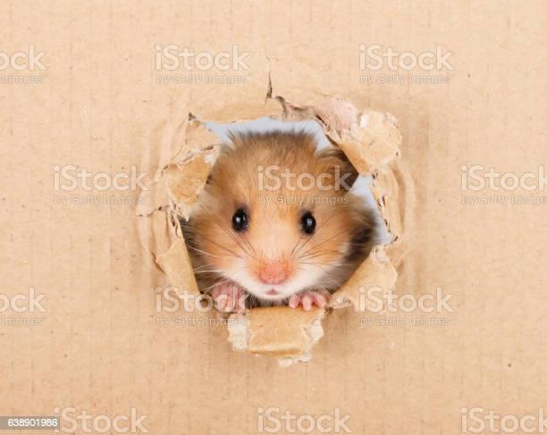 Little hamster picture id638901986?b=1&k=6&m=638901986&s=612x612&h=e9xff7vsnmwcqjhvuwotqaohooqirb45nms3toxcqmq=