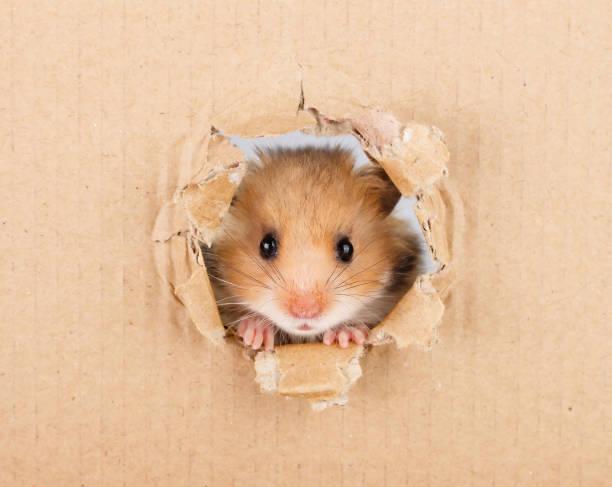X Hamster Bilder