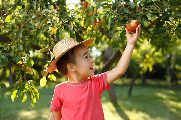 Little happy boy touching apple stock photo