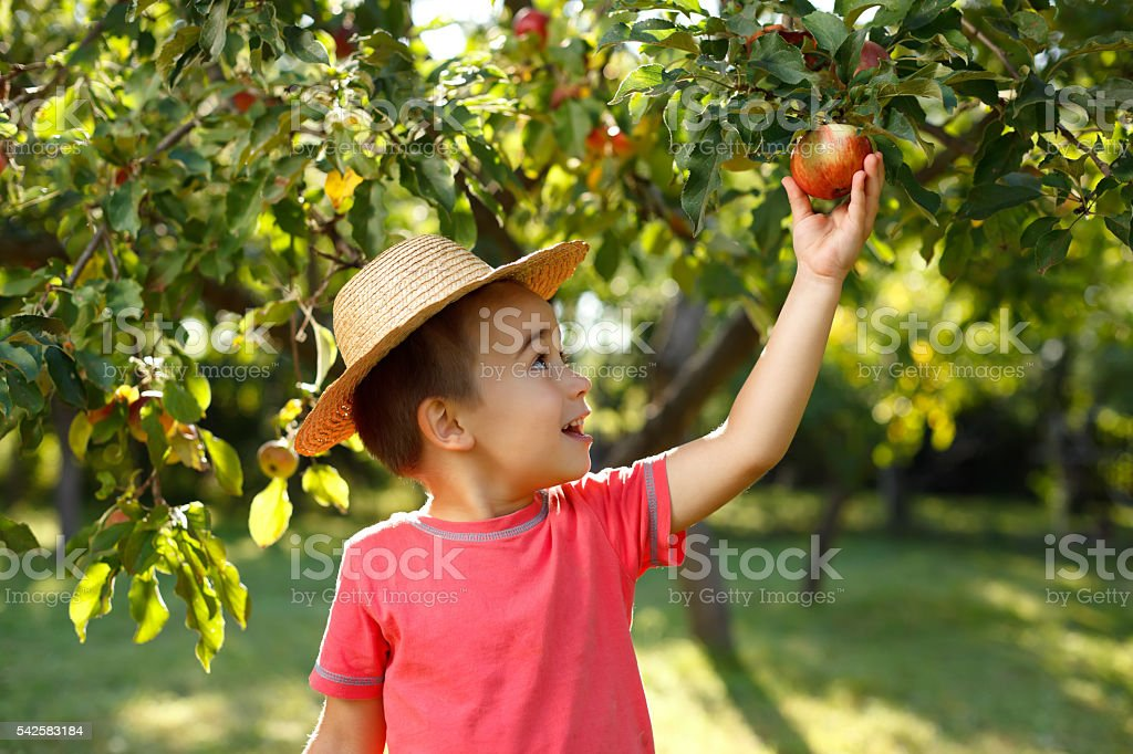 Little happy boy touching apple stock photo