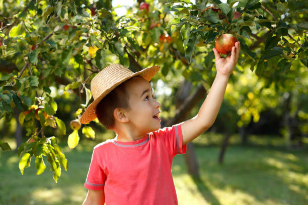 Little happy boy touching apple